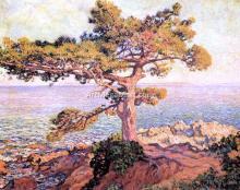 A Pine by the Mediterranean Sea