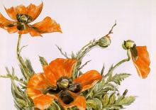 Poppies - Charles Demuth